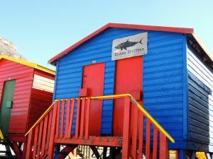Shark Spotters. It looks open-ish