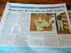 Yes, that's an entire page for a disabled cat. I'm not upset.
