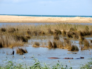 Looking across the wetlands to the beach
