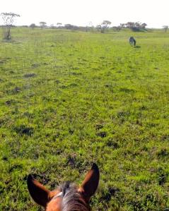 Equine bros