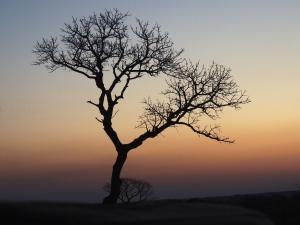 Tembe at dusk