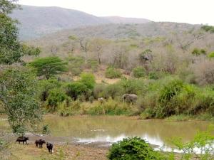 Elephants and buffalo! Two of the big five