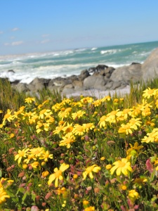 Flowers along the Atlantic
