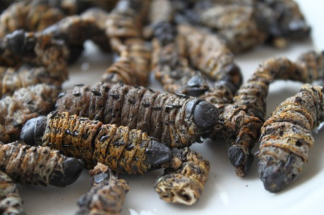 Mopani Worms. The photo of me eating them is on Julia's phone!