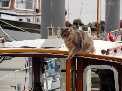 ANOTHER CAT BOAT! THIS TIME, WITH MORE FREEDOM FOR THE CAT!