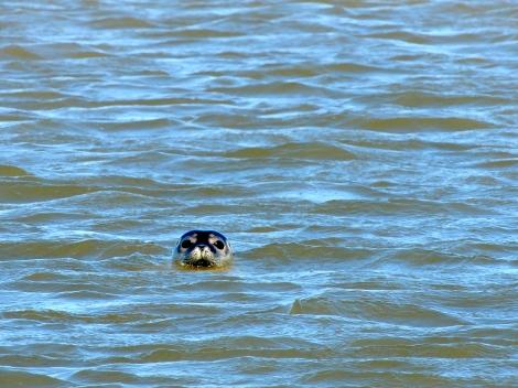 A loose seal!