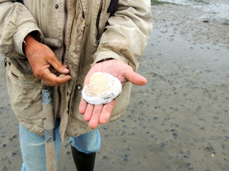 The world's oldest animal - the Atlantic Quahog
